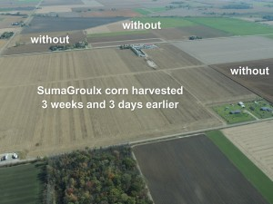 SumaGroulx corn field was able to be harvested 3+ weeks earlier than boarding corn fields.